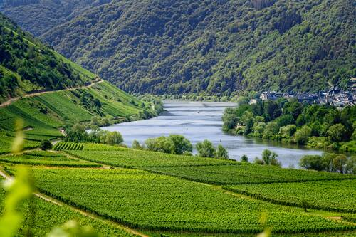 mosel, river, vineyards - Alf an der Mosel